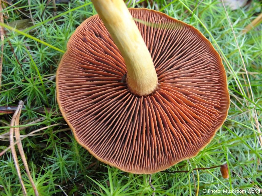 poisonous mushrooms mushroom world